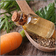 Carrot root & seed oil